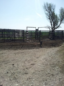 Our sorting corral.